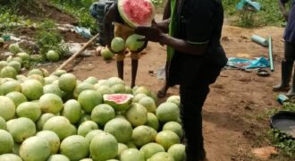 CHEAPEST FARM LANDS IN REMO OGUN STATE
