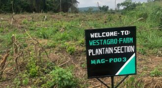 BLOSSOMING FARMLAND AT REMO OGUN STATE
